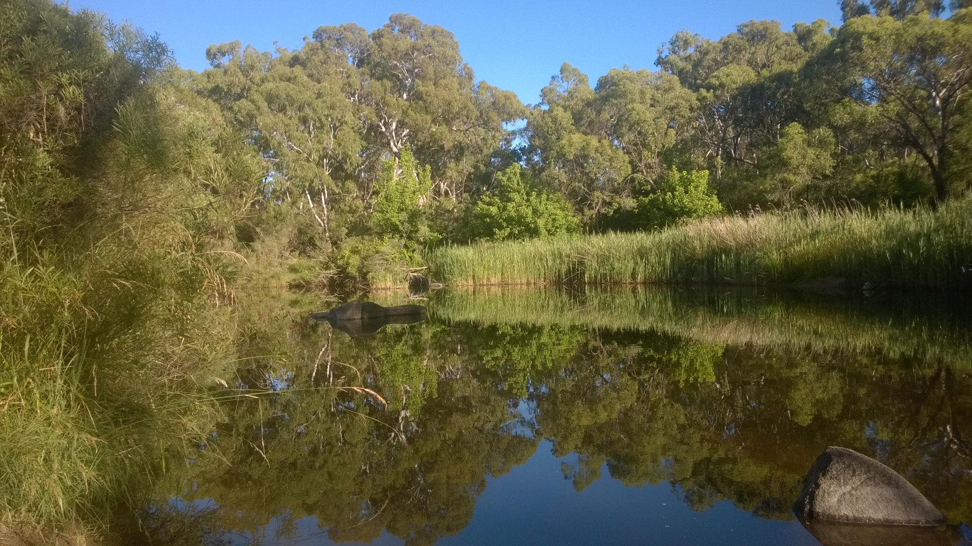 Creek at the camp ground at Wooldridge Fossicking Reserve, about 6kms out of Uralla, where you can fossick for gold and gems, and free camp