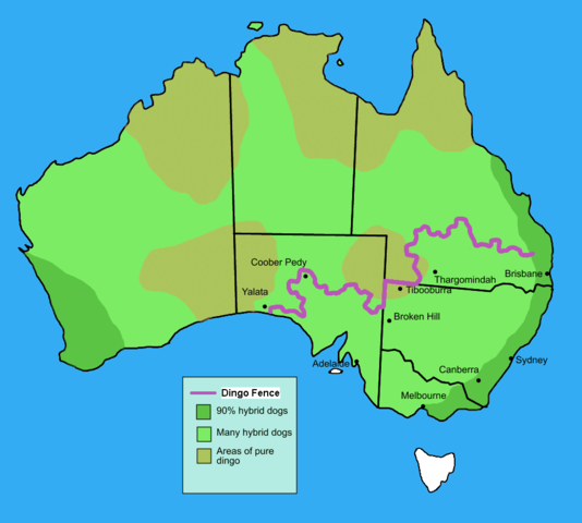 Map of Australia showing the Dingo Fence running across Queensland, following along the NSW border in the north-western corner, then across South Australia
