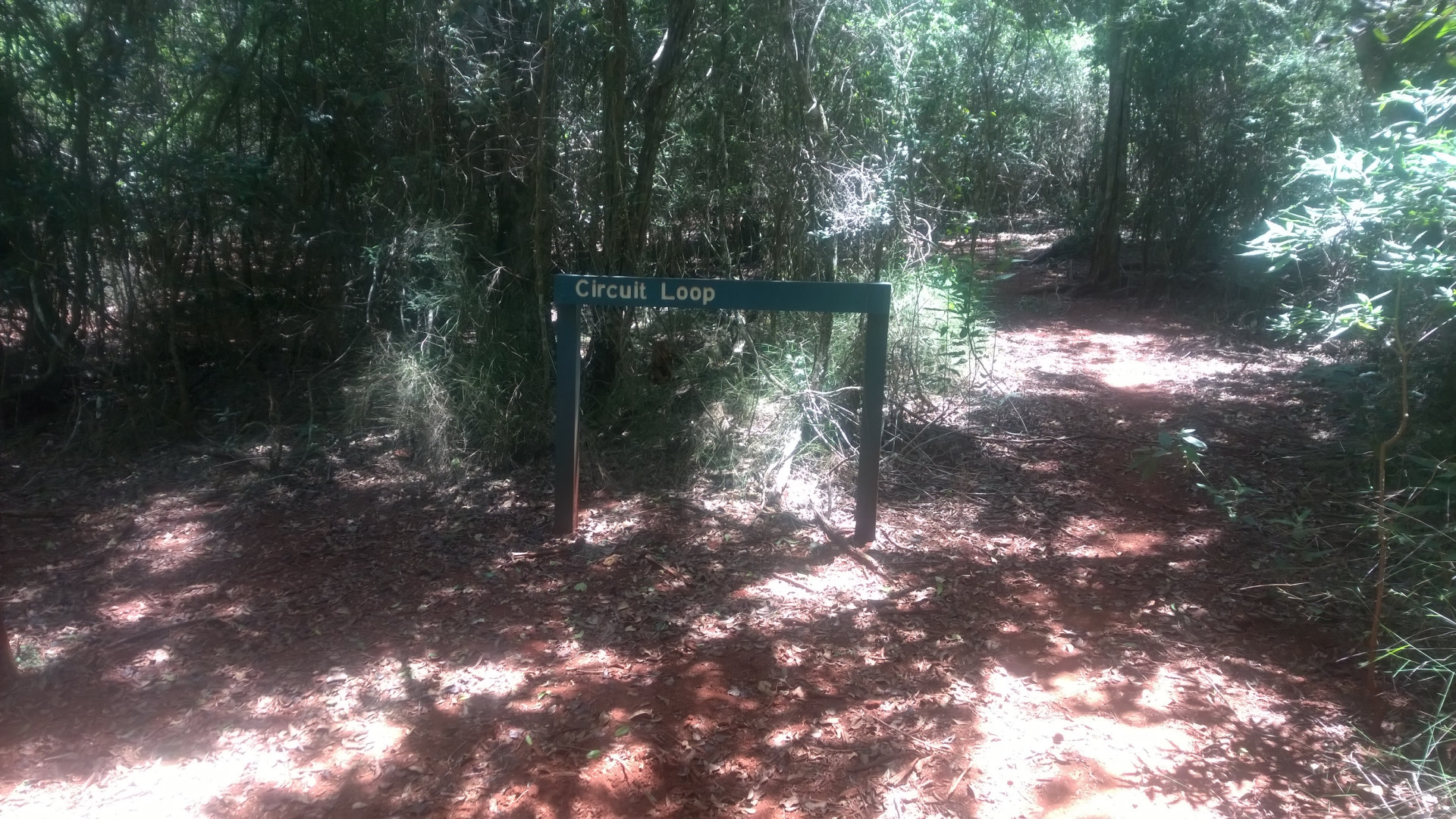Start of the Circuit Loop walk at Jack Smith Scrub Conservation Park. It is a small softwood scrub in an area once a vast dry rainforest, mostly cleared for agriculture use