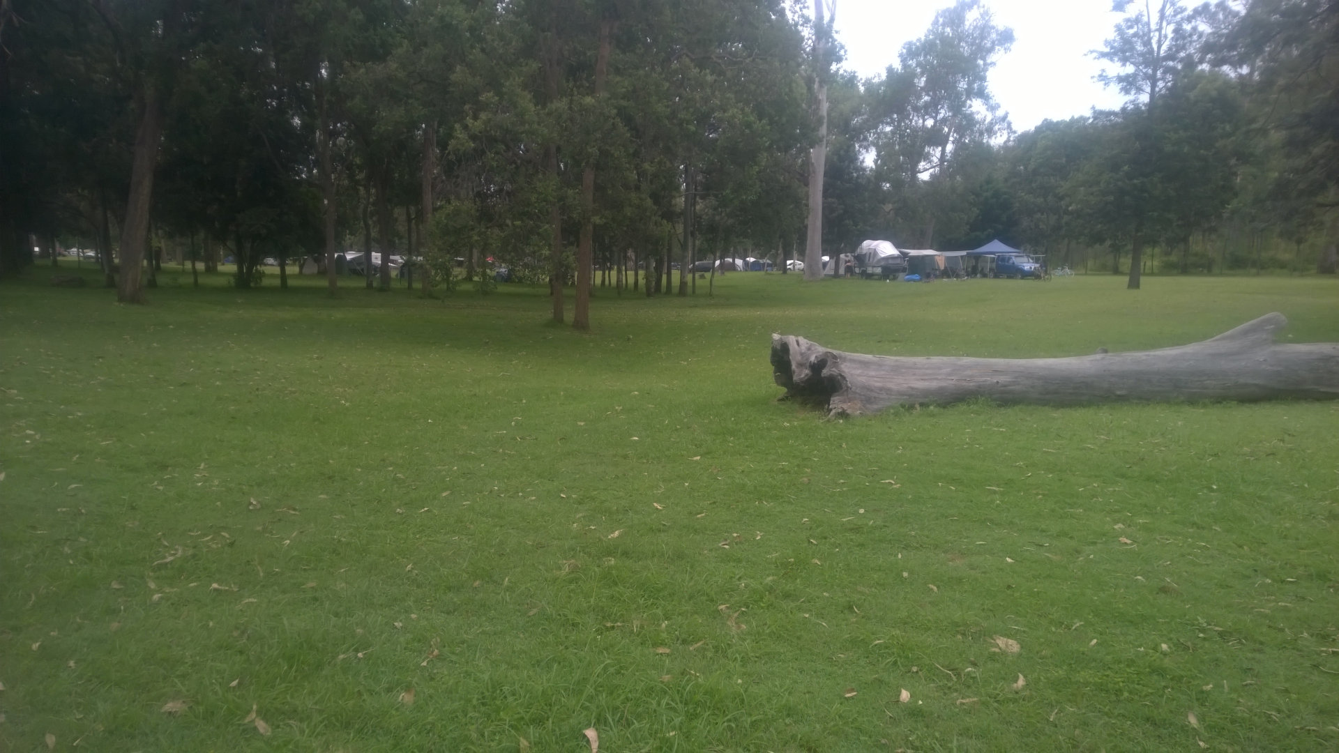 Grassy camping ground at Bigriggen Park, a bush camping ground in the Scenic Rim between Boonah and Rathdowney. It offers beautifully kept grassy camp grounds, and fresh water flowing along the Logan River running beside it