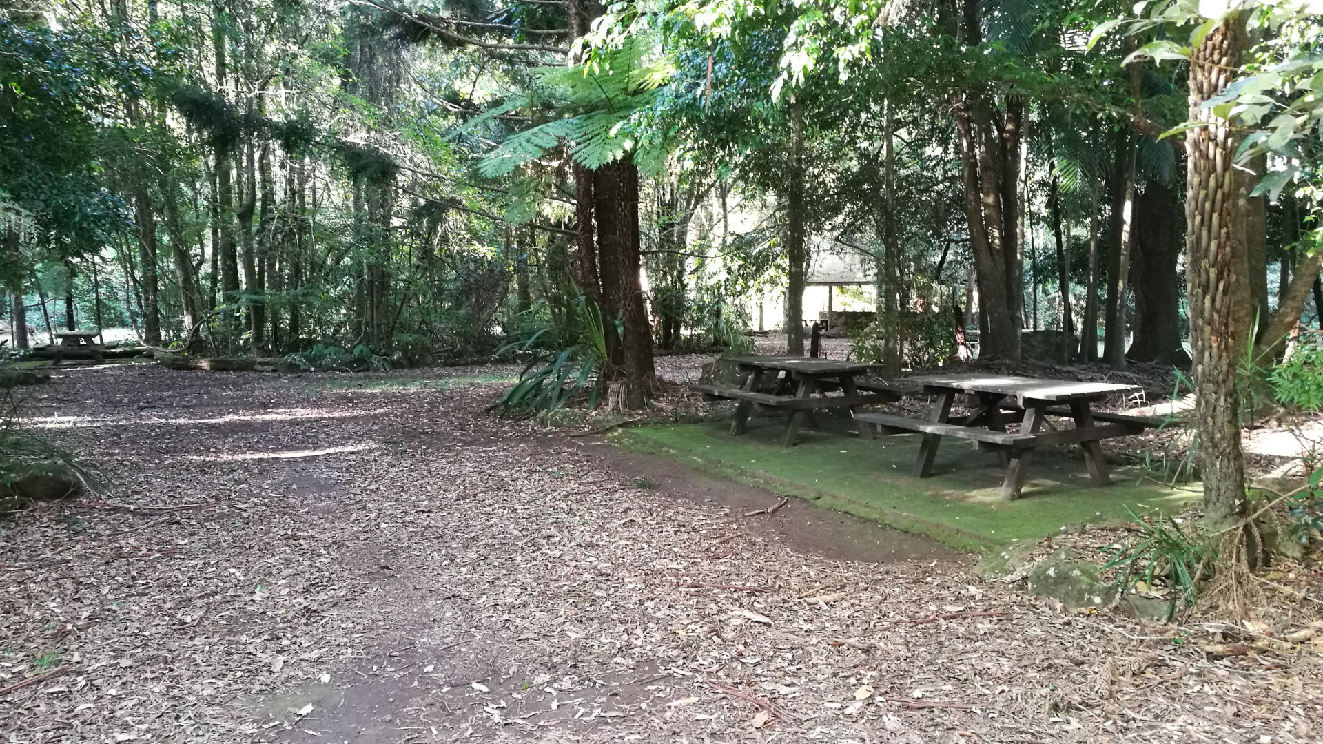 Picnic tables at the Gwongorella Picnic Area at Springbrook in the Gold Coast hinterland. It has picnic tables, free BBQs, and toilets, and a popular access point to Purling Brook Falls