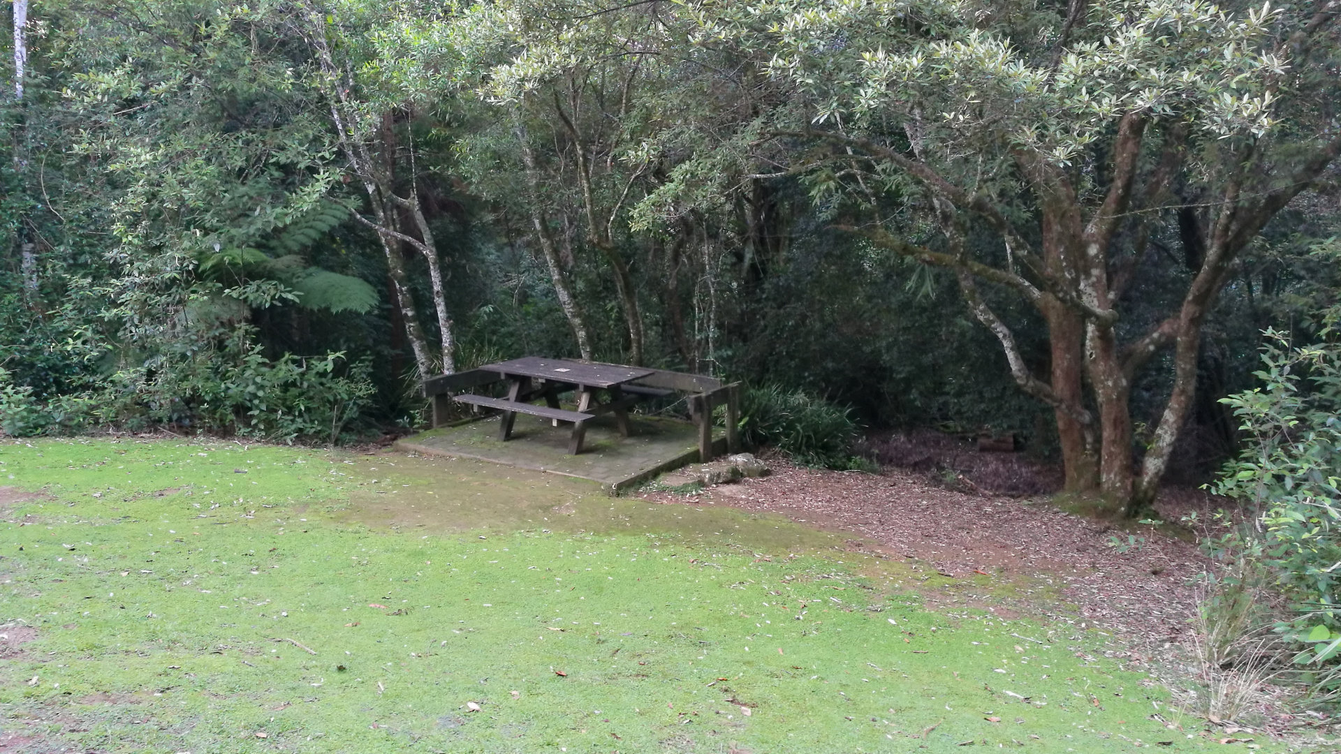 Picnic table at Tallanbana Picnic Area, located at Springbrook Gold Coast. Tallanbana is Aboriginal meaning 'out of the rushes'. A walk leads to the Twin Falls circuit, following the top and bottom of the western cliffs of the canyon