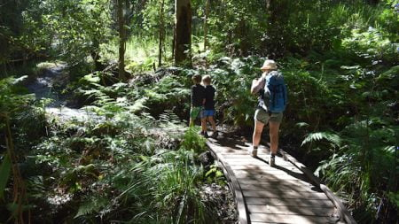A woman and two children walking through the rainforest with a wooden boardwalk, taken on the walk to Booloumba Creek Falls at Conondale National Park