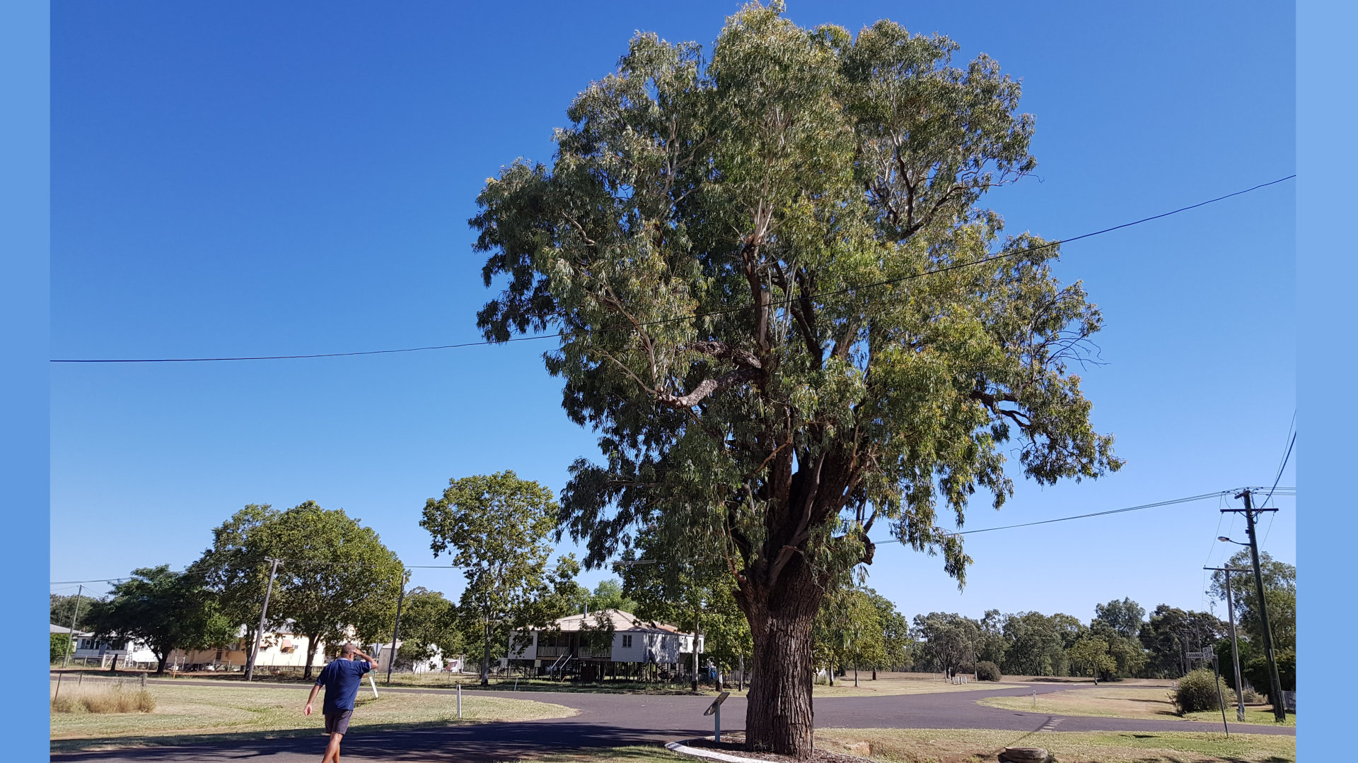 The Kenniff Tree, named after the brother bushrangers Patrick and James Kenniff (Pat and Jimmy). They tethered horses to the old Coolibah tree when visiting Augathella. The brothers were captured, one served 16 years goal, the other hung in Boggo Road Gaol.