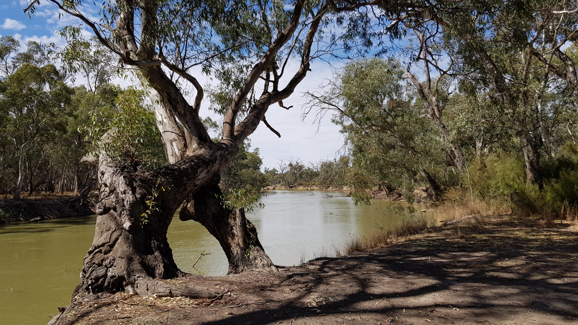 Murray River at the Loddon Floodway free camp area on Pental Island. It is on the northern section of the island on the banks of the Murray River.