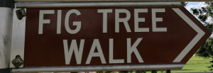 Brown sign for Fig Tree Walk