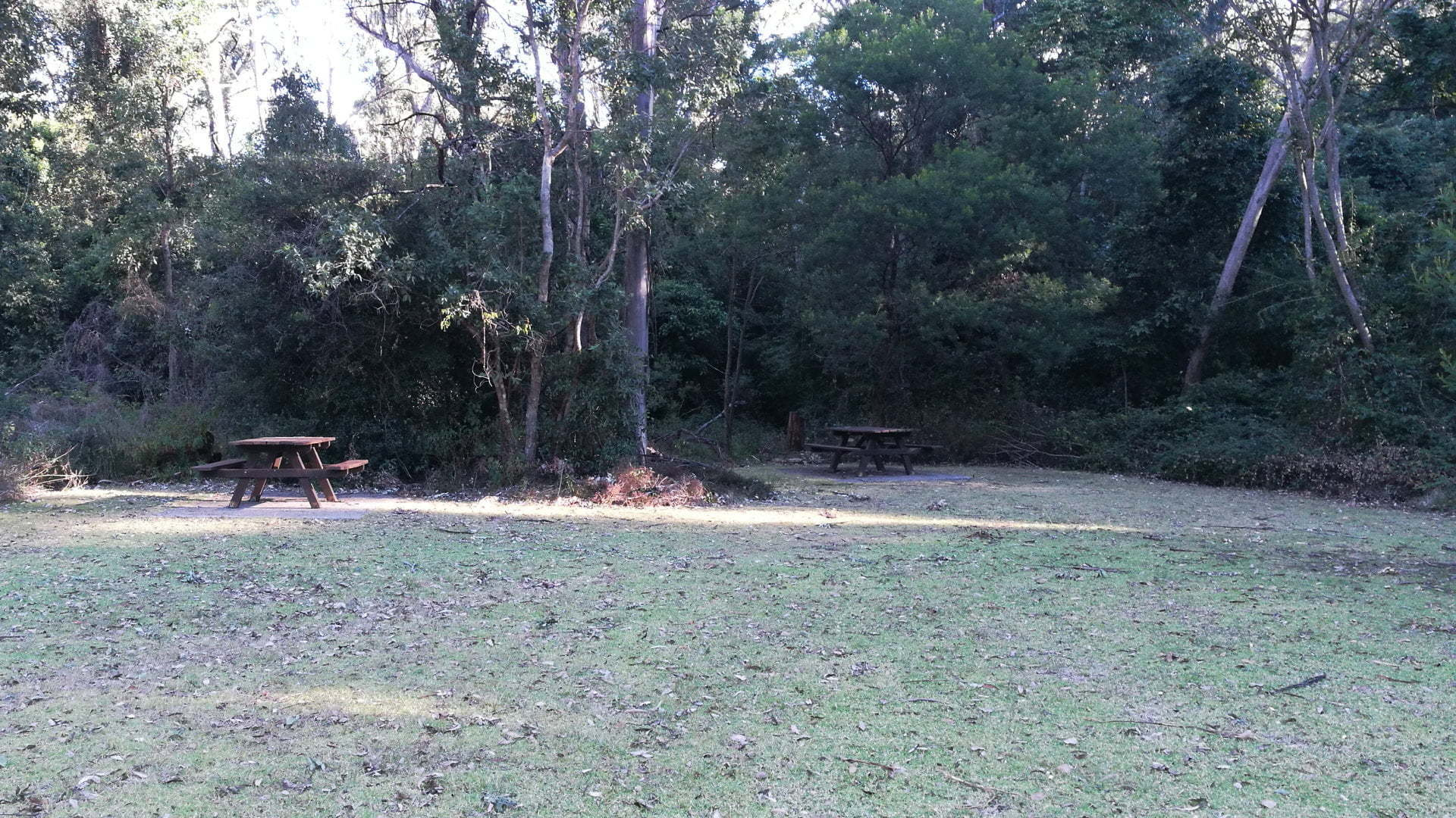 Main Range National Park Picnic Area, open grass with picnic tables and bush behind