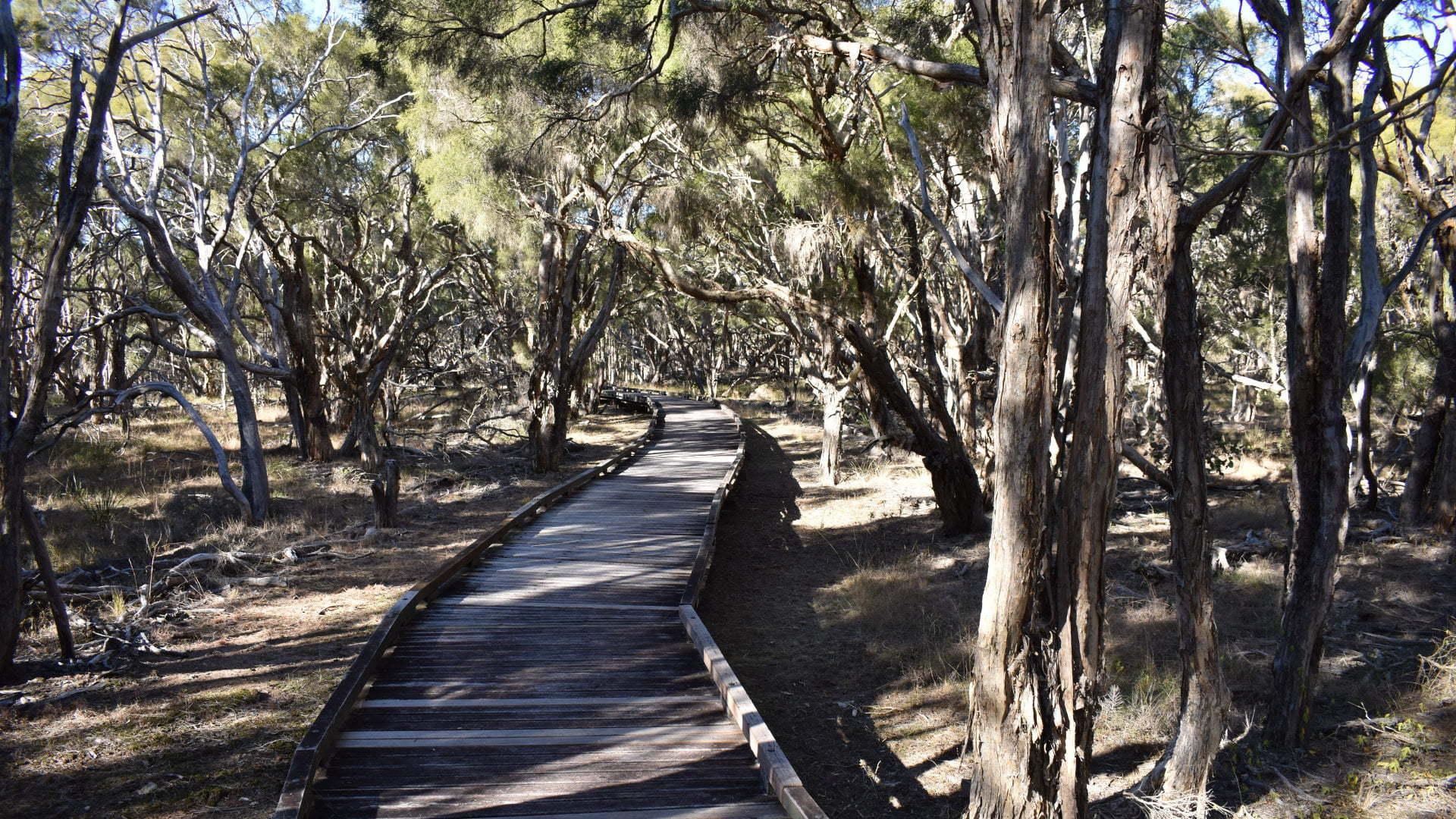 Purga Nature Reserve Boardwalk