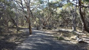 Gravel path through Swamp Tea-Tree forest at Purga Nature Reserve