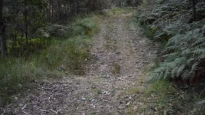 Spicers Gap Heritage Trail showing whoa boy