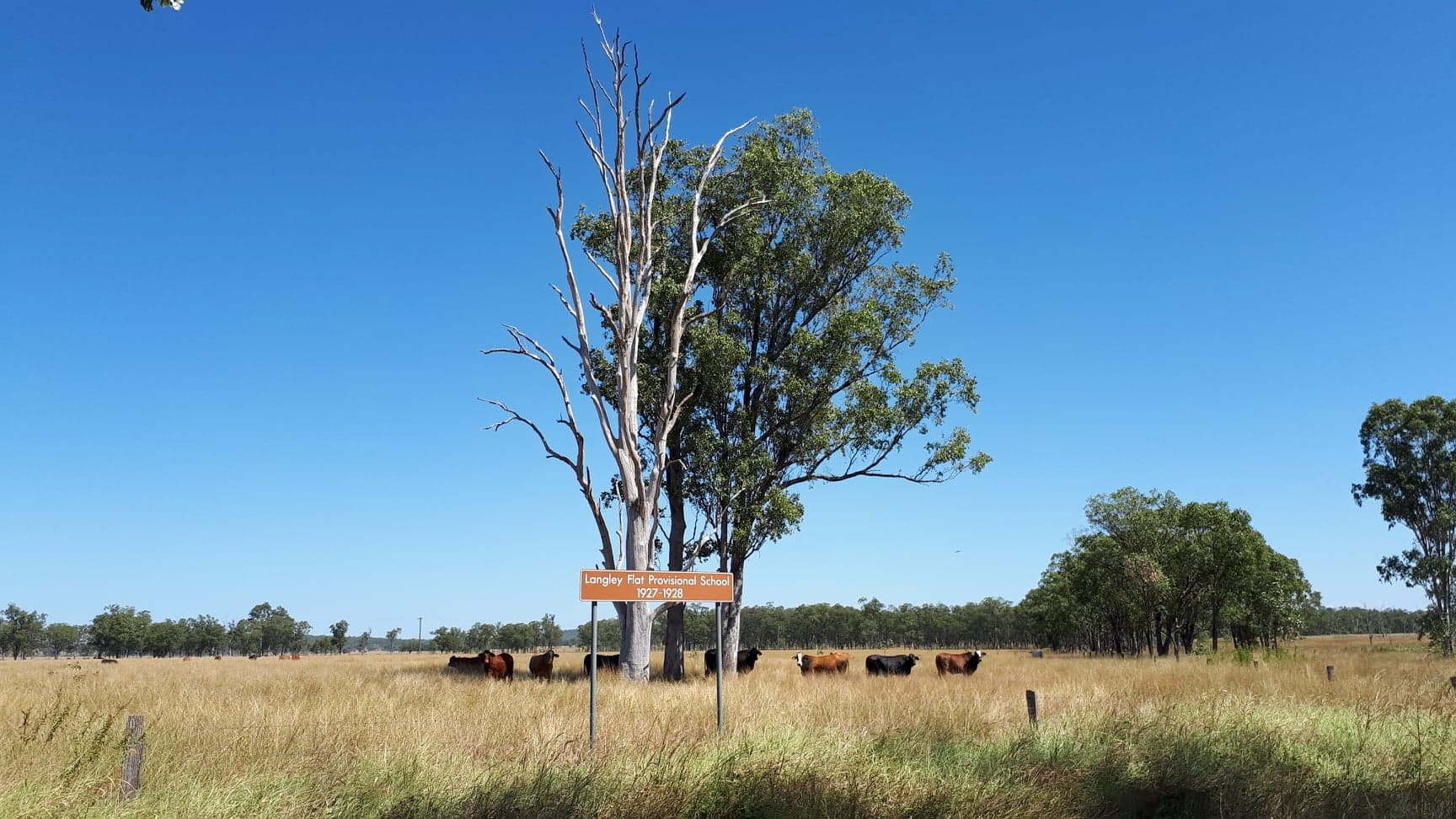 Paddock with tall trees in the centre and cattle around the trees, and a brown sign for Langley Flat Provisional School in front of them