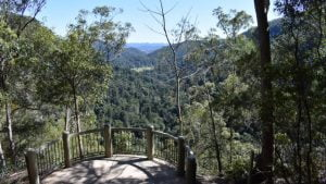 View from a lookout, on the Picnic Creek walk at Kondalilla Falls National Park