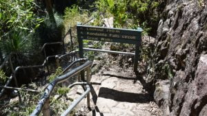 Stairs leading down to a lookout and the Kondalilla Falls circuit, hand rails on the side of the stairs