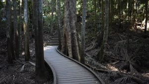 Boardwalk through the forest at Mapleton Falls National Park on the Woompoo Circuit Walk