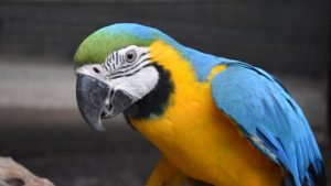 Macaw, at the Flying High Bird Sanctuary