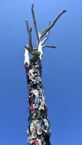 Dead tree covered with thongs (flip-flops) nailed to it