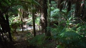 Rainforest walk at Kroombit Tops National Park