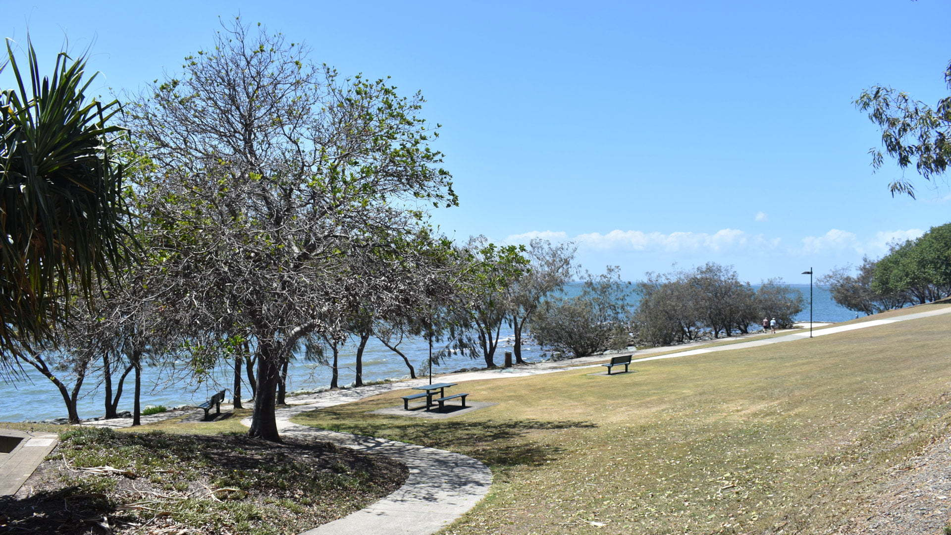 Parkland on the coast, at the Gayundah Coastal Aboretum at Woody Point on the Redcliffe Peninsula