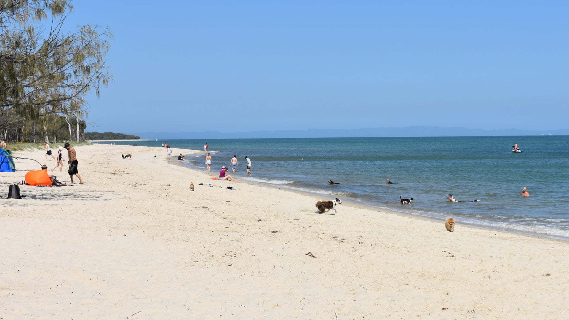 Calm beach with people and dogs, at Red Beach looking east, a dog friendly beach on Bribie Island