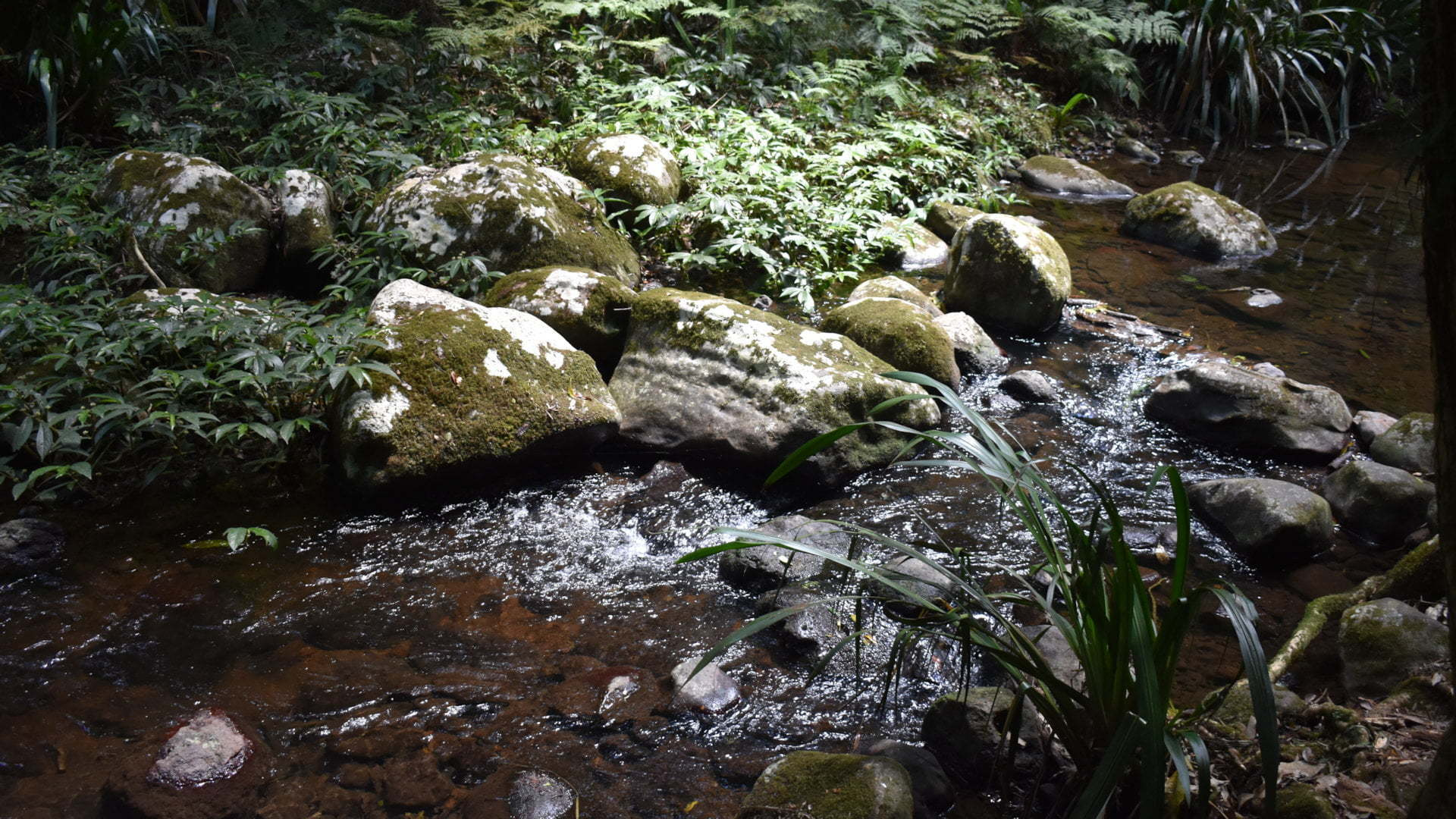 Creek in rainforest, Brindle Creek at the Border Ranges National Park