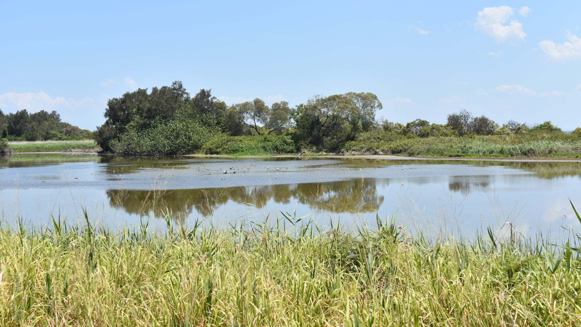 Water lagoon at Buckley's Hole Conservation Park, used by local and migratory shorebirds