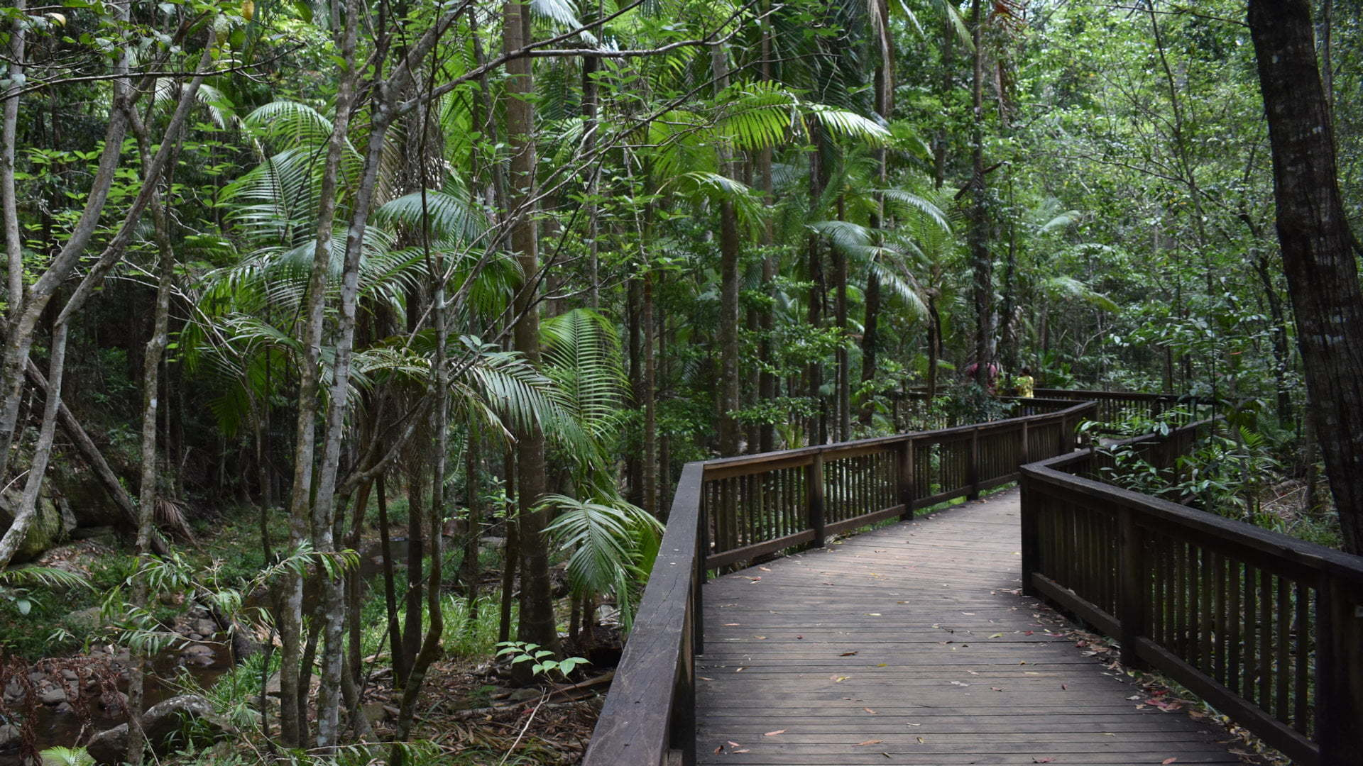 Boardwalk through a rainforest, at Buderim Forest Park along Martins Creek