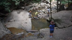 Creek crossing at Buderim Forest Walk