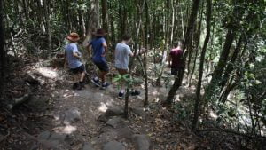 People walking down a bush path with stone steps, along the Buderim Forest Park circuit walk