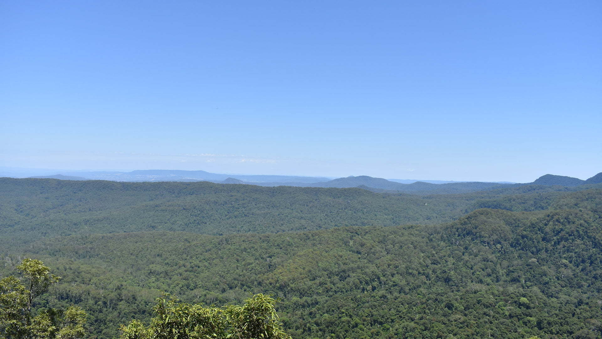 View from Murray Scrub Lookout at Toonumbar National Park