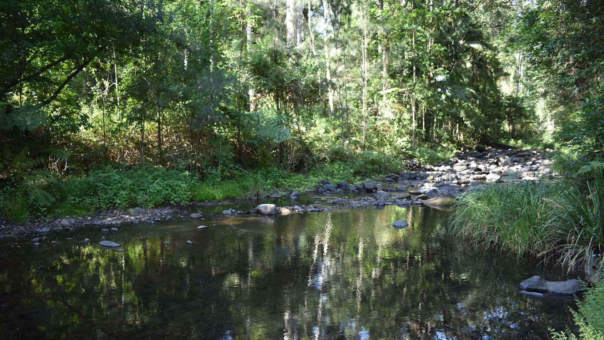 Iron Pot Creek at the picnic area in Toonumbar National Park