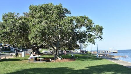Park next to the water with a large tree above a picnic table, at Baxters Jetty in Shorncliffe