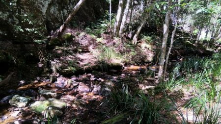 Small rocky creek in a shaded forest, at the end of Boundary Falls walk in Gibraltar National Park