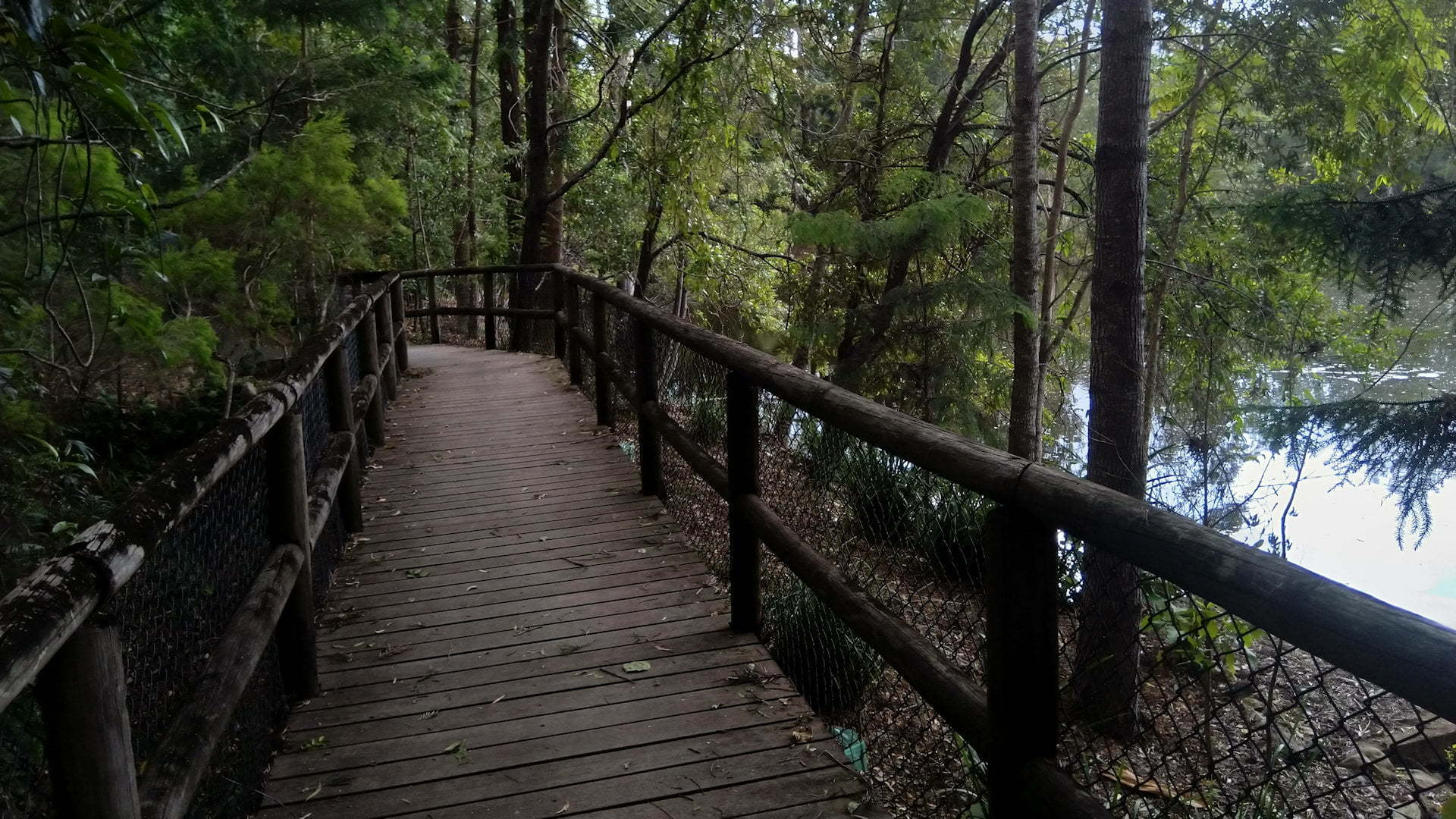 Wooden walkway through forest next to a waterhole, taken at Kumbartcho Sanctuary