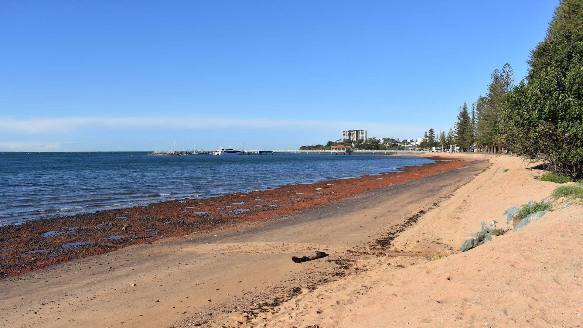 Beach with the water to the left, sandy at the top of the beach and exposed red rock base at the waterline, taken at Queens Beach South on the Redcliffe Peninsula
