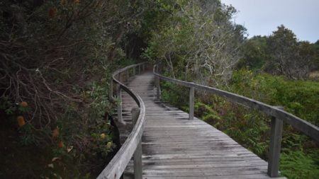 Boardwalk along the Boorkoom Wilsons Head walk in Yuraygir National Park