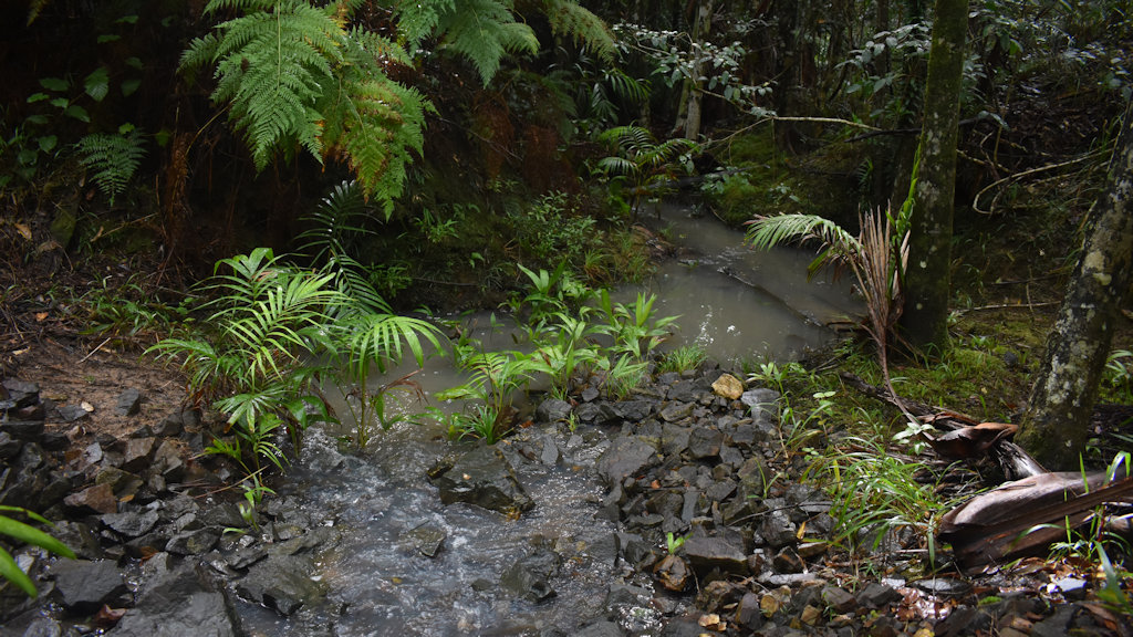 Small creek at Dularcha National Park with running water