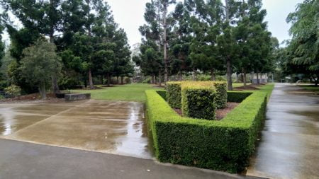 Manicured hedge between paths at Rocks Riverside Park