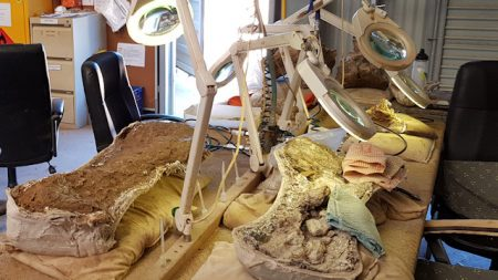 Fossils under preparation in the Laboratory at the Australian Age of Dinosaurs Museum in Winton