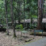 Disused sawmill at the end of the walking trail at Mt Cougal National Park