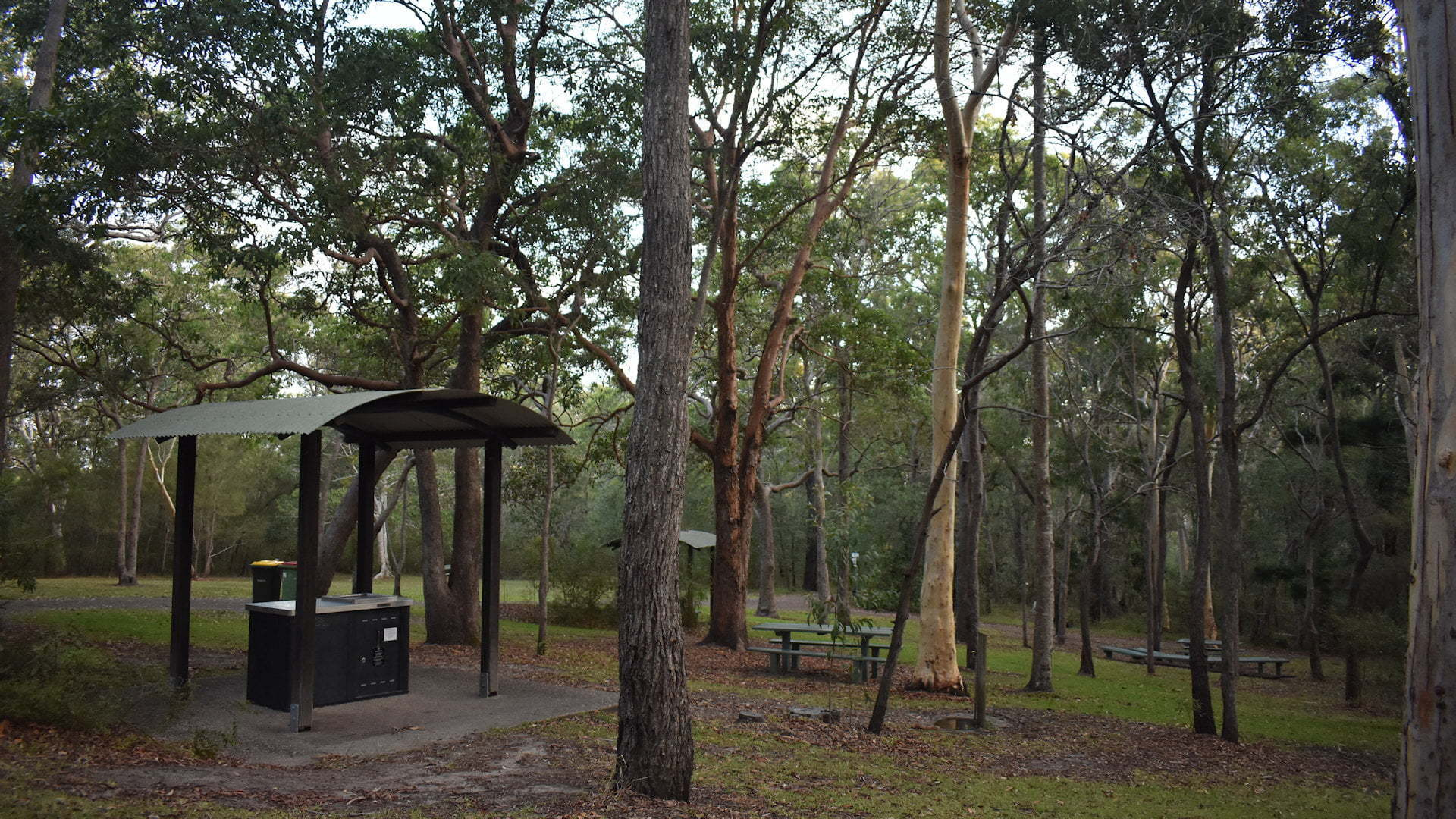 Bushland with BBQ shelter at the Ben Bennett Bushland Park in Caloundra