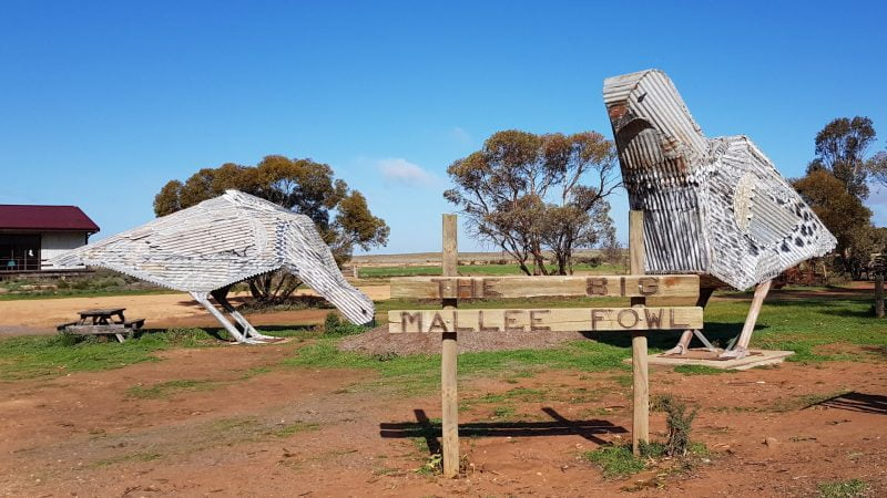 The Big Mallee Fowl